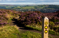 Walking trail signs and heather on Norland Moor